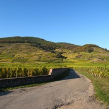 Dans les vignes2